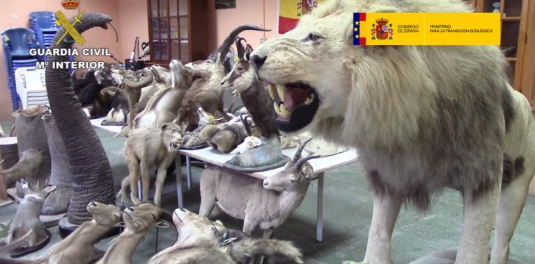 Incautacion 200 especies