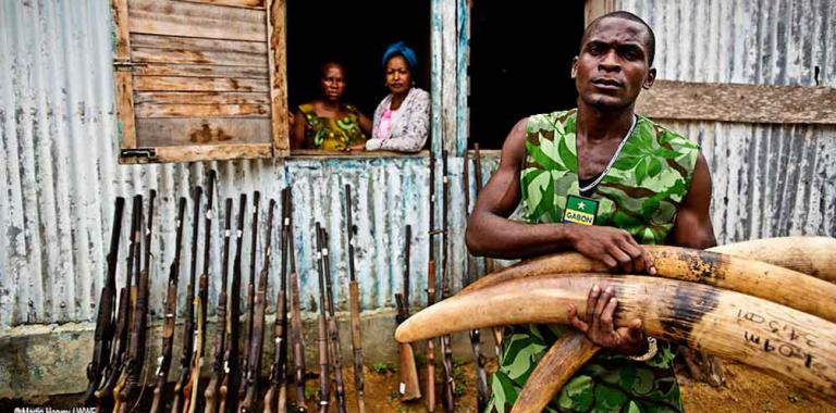 WWF contra el tráfico de especies